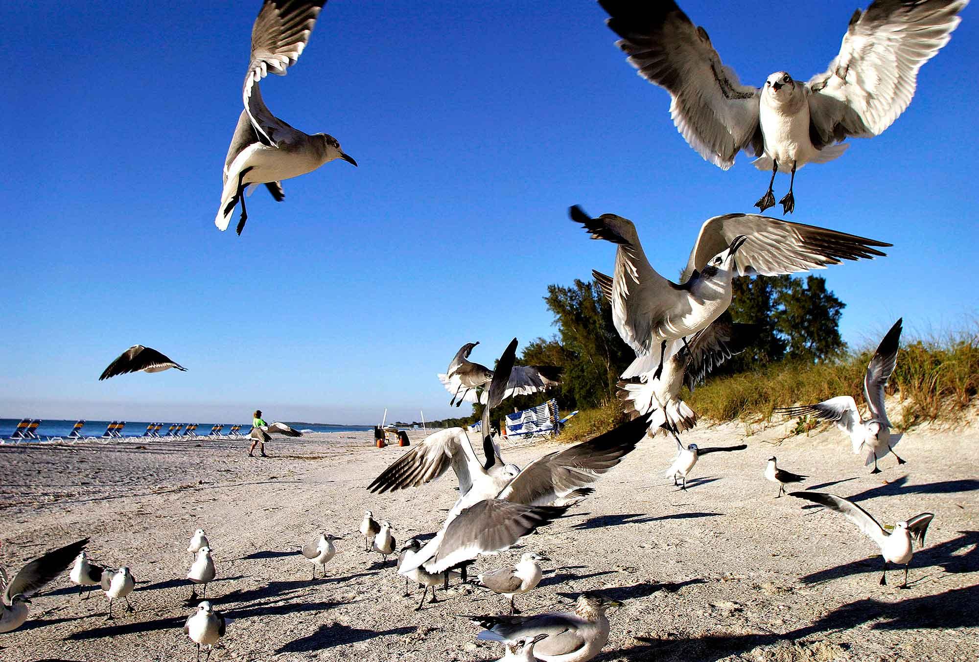Fugle på stranden i Florida