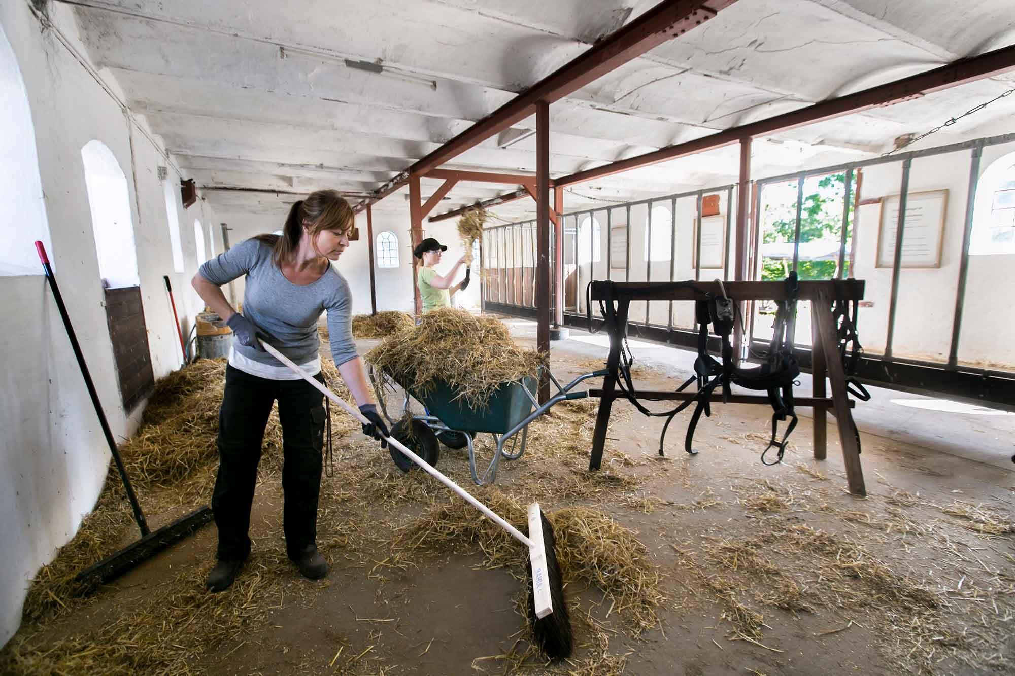 Rengøring i hestestald