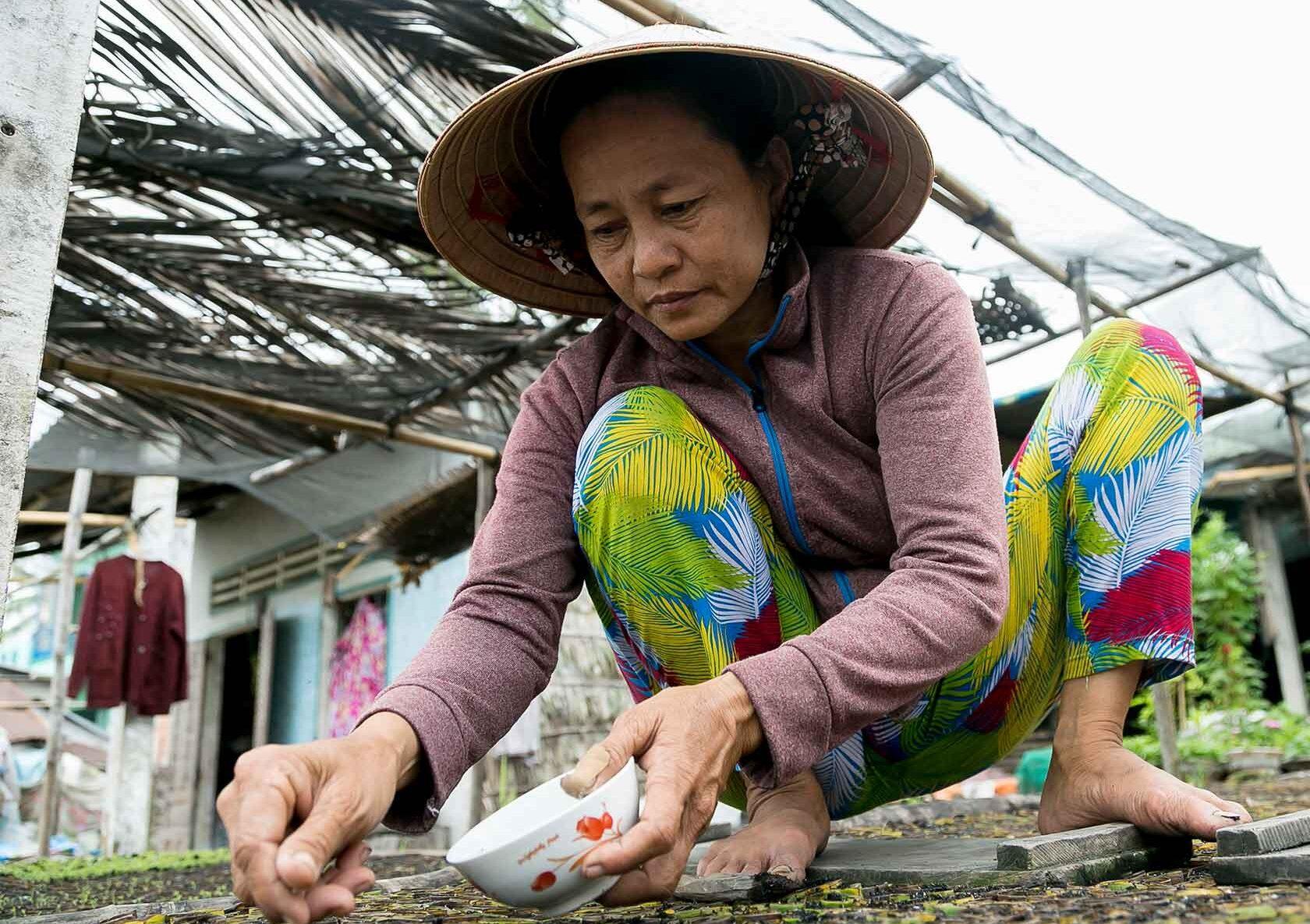 Vietnam-kvinde sår nye planter siddende på hug